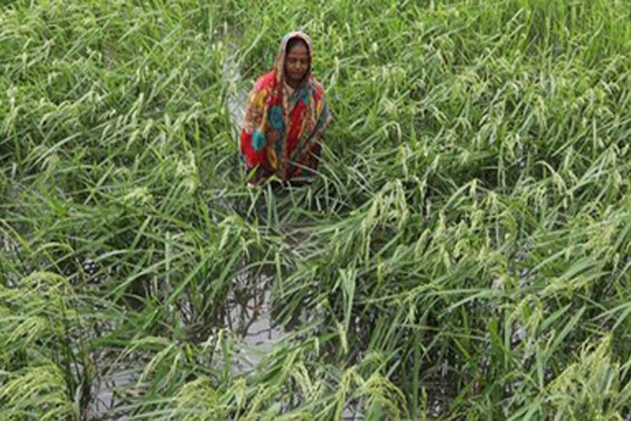 Cyclone destroyed crops worth Tk 2.63b: Minister