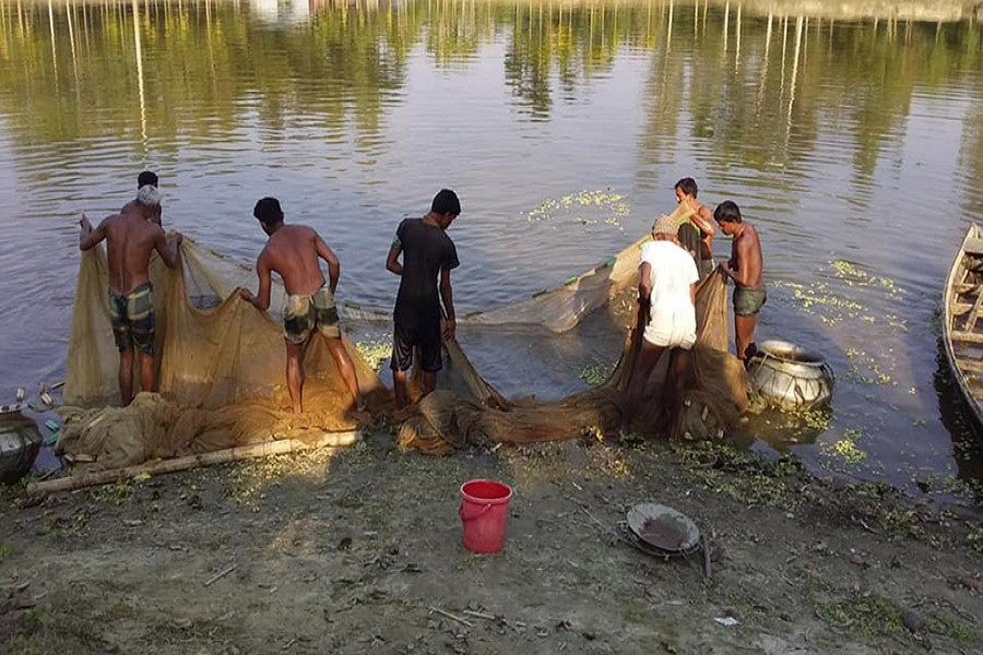 A group of cultivators catching catfish with a net from a pond in Adamdighi upazila of Bogura — FE Photo