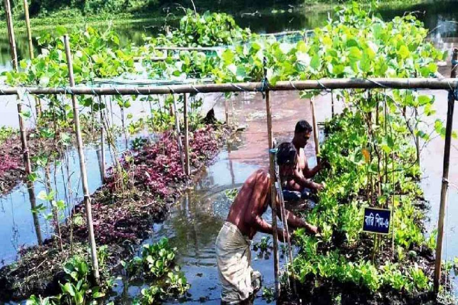 Vegetable farming on floating beds gets popularity in Sylhet