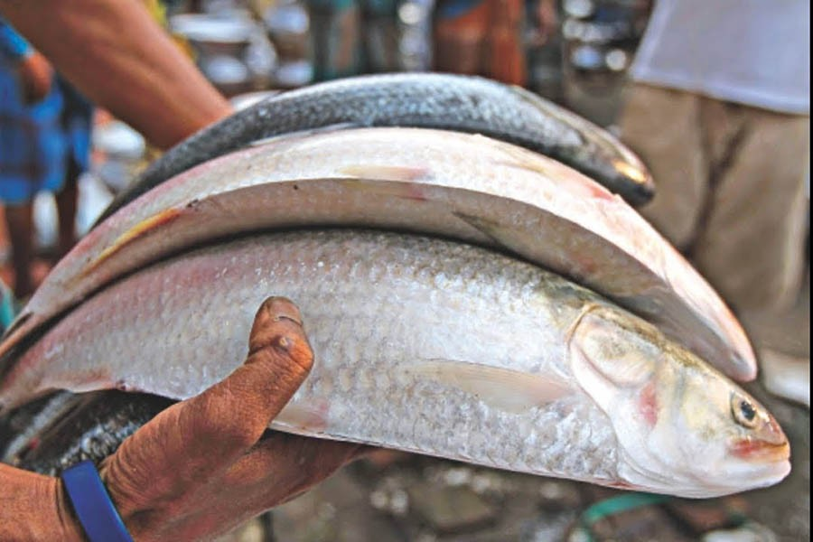 Hilsa dearer despite abundant supply