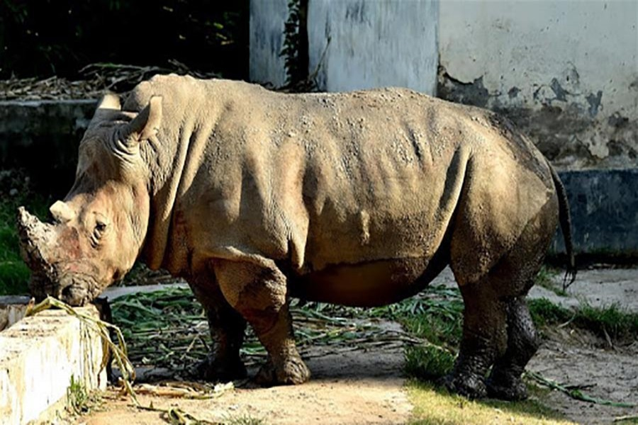 Visitors to get free access to National Zoo on first Sunday of every month on Mujib Year