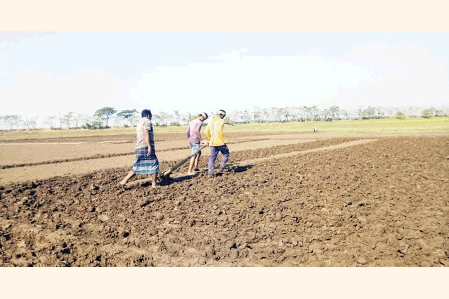 Farmers readying lands, covered with silts, for Boro cultivation in Tahirpur haor areas of Sunamganj — FE Photo
