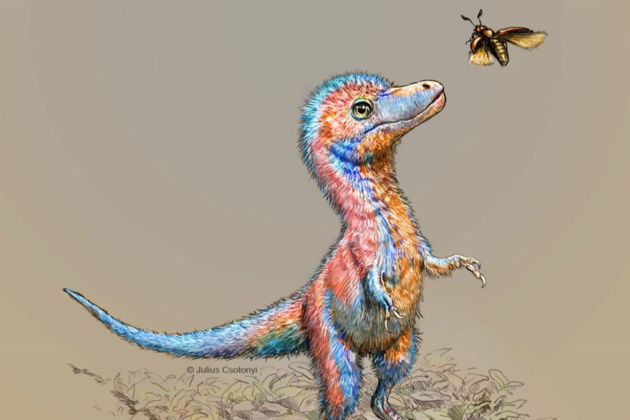 A baby tyrannosaur from the Cretaceous Period of North America, based on partial fossils unearthed in the US state of Montana and in the Canadian province of Alberta, is seen in an undated artist's rendition  — Julius Csotonyi/Handout via Reuters