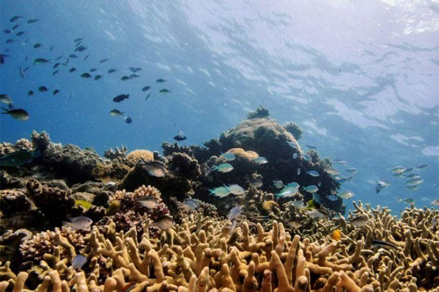 Noise pollution harming sea life, scientists say