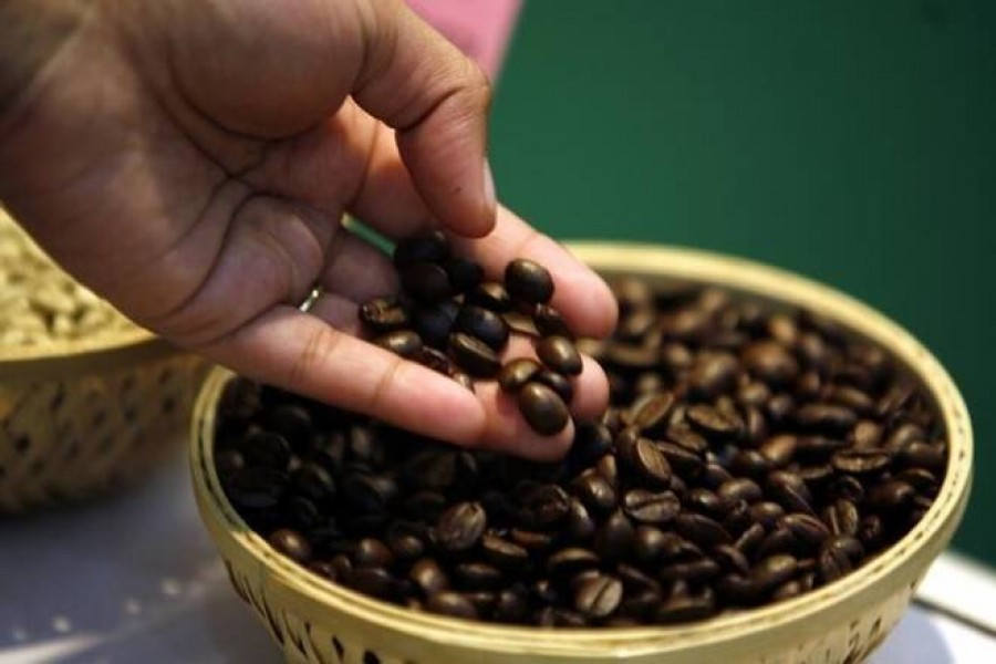 Coffee, cashew cultivation in Chattogram bears export potential