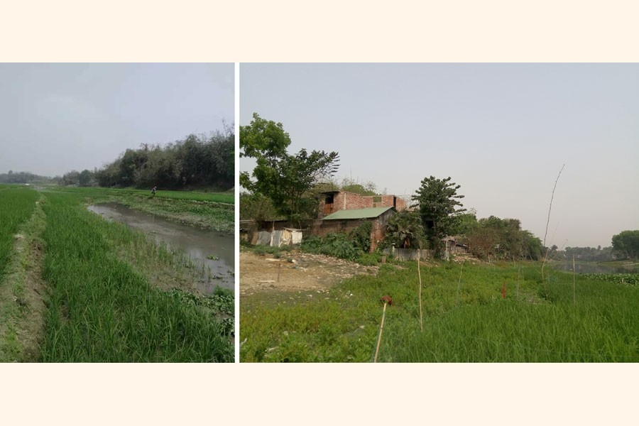 A combination photo shows paddy being cultivated on the bed of the Kali river (left) in Jhenidah's Nischintapur and houses constructed on the bank of the Naboganga river in the same district's Chaklapara — FE