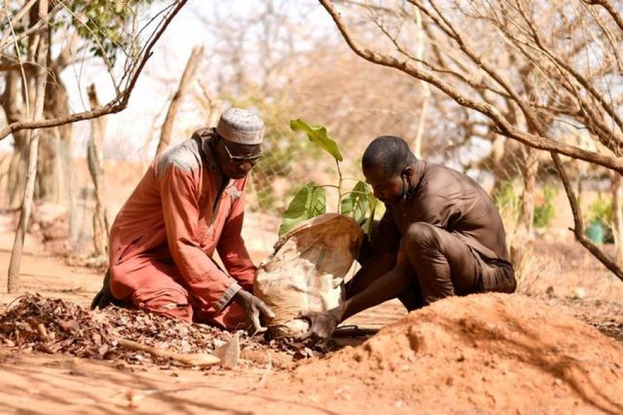 Yacouba Sawadogo, a farmer, who is known as the 'man who stopped the desert' for bringing life back to the arid lands, plants a tree in Ouahigouya, Burkina Faso January 31, 2021. REUTERS/Thiam Ndiaga
