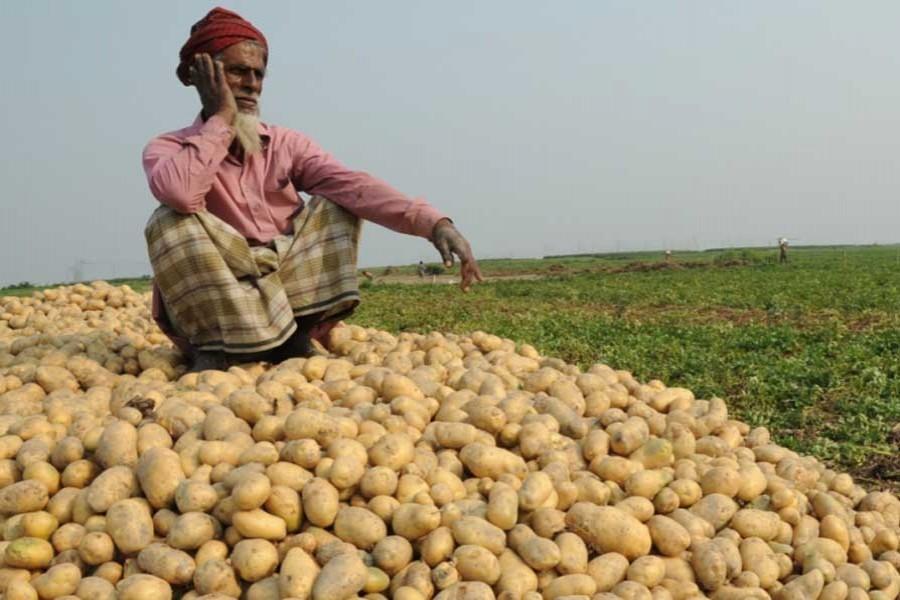 Addressing potato growers' storage problem