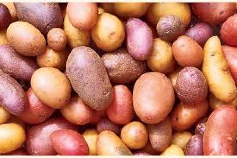 Finding a way out to avoid potato glut