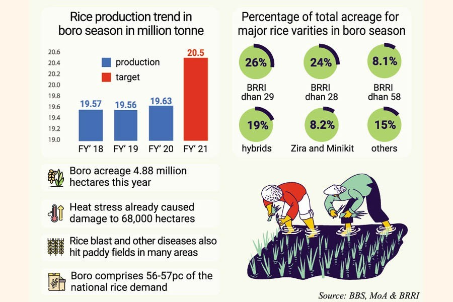 Static Boro rice production may pose food security risk for Bangladesh