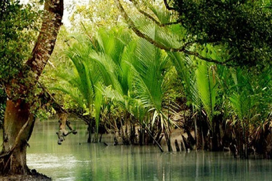 State parties, UNESCO heavily criticised for not protecting Sundarbans