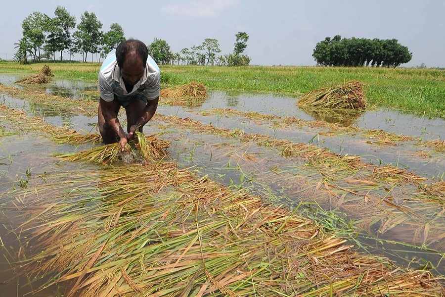 Small-scale farmers getting pittance as wage is outrageous, says IFAD