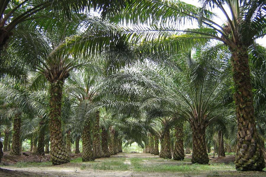 The evolution of Malaysian palm oil industry