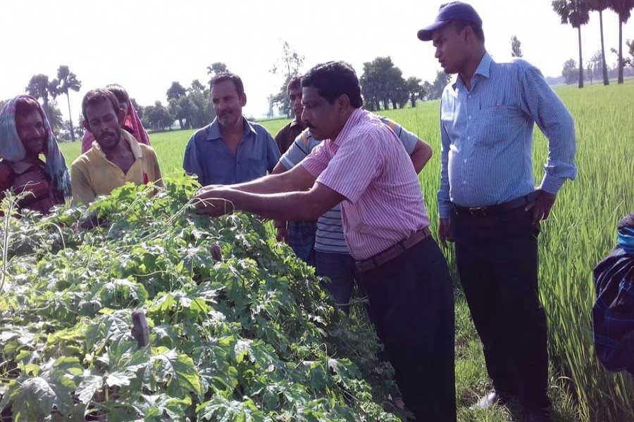 A high official of (DAE is monitoring a bitter gourd land in Khetlal upazila of Joypurhat on Monday.— FE Photo