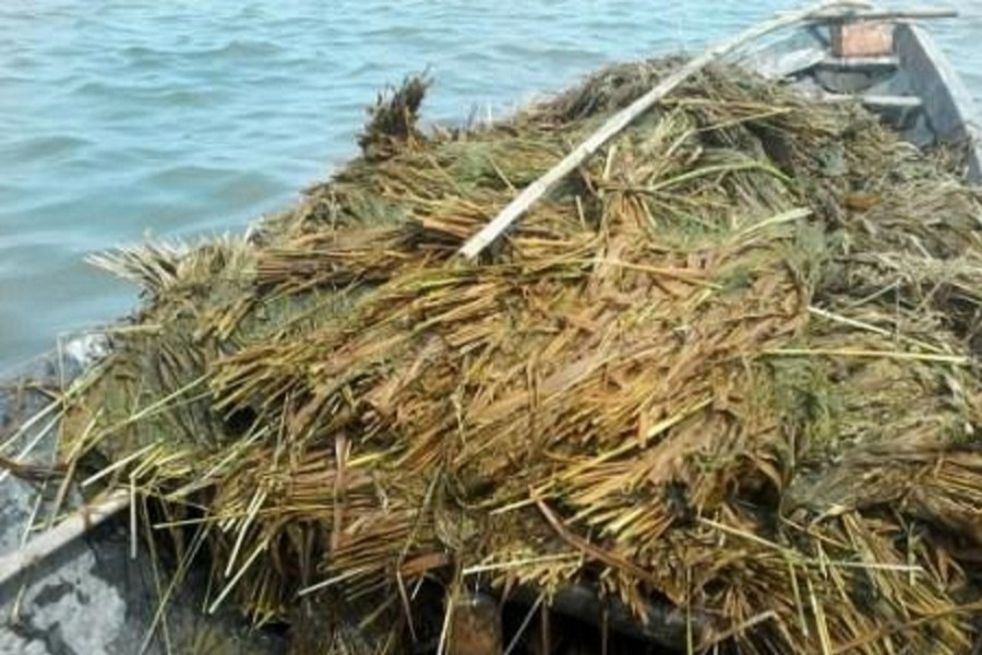 Floods affect country's food production: FAO
