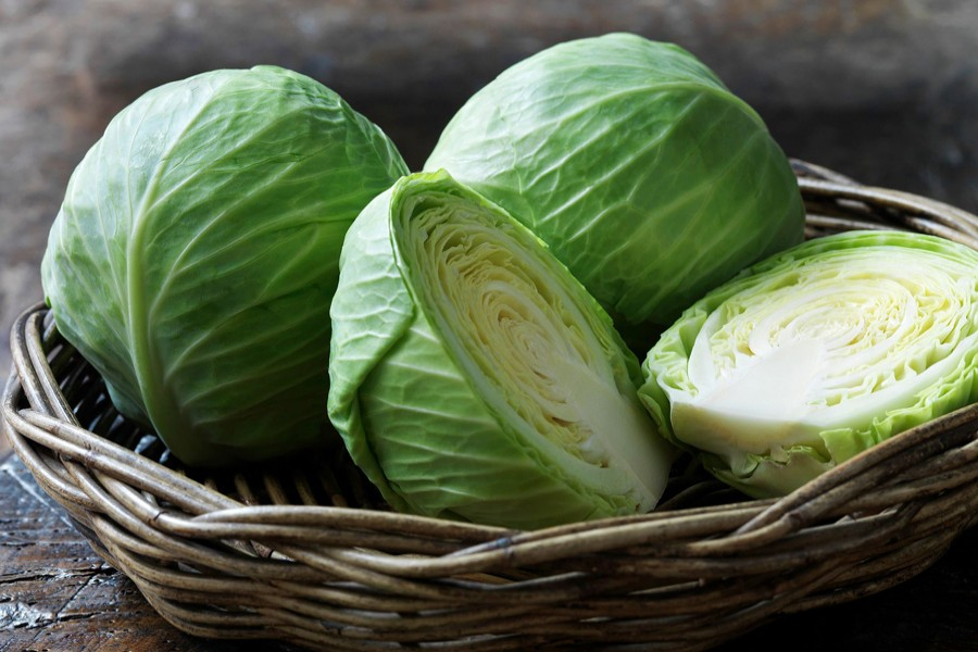 Early cultivated cabbage growers  making handsome profit
