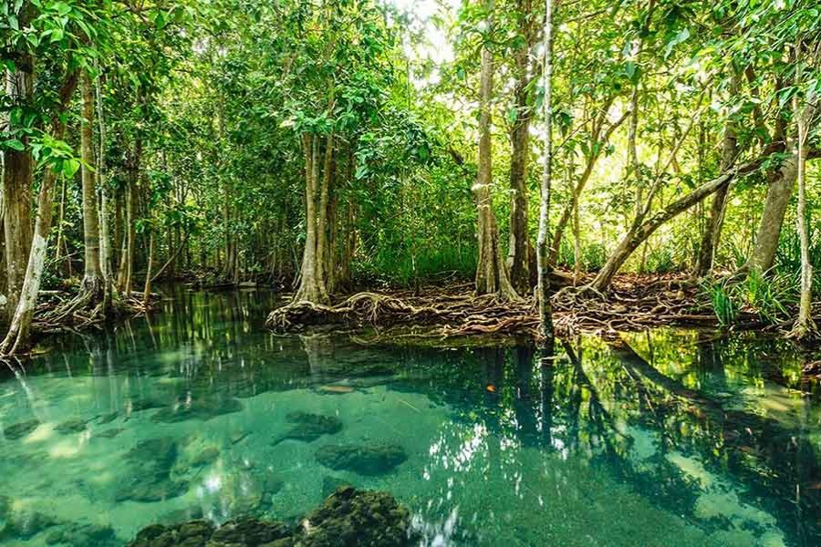 Forest officials arrest two with mangrove timber