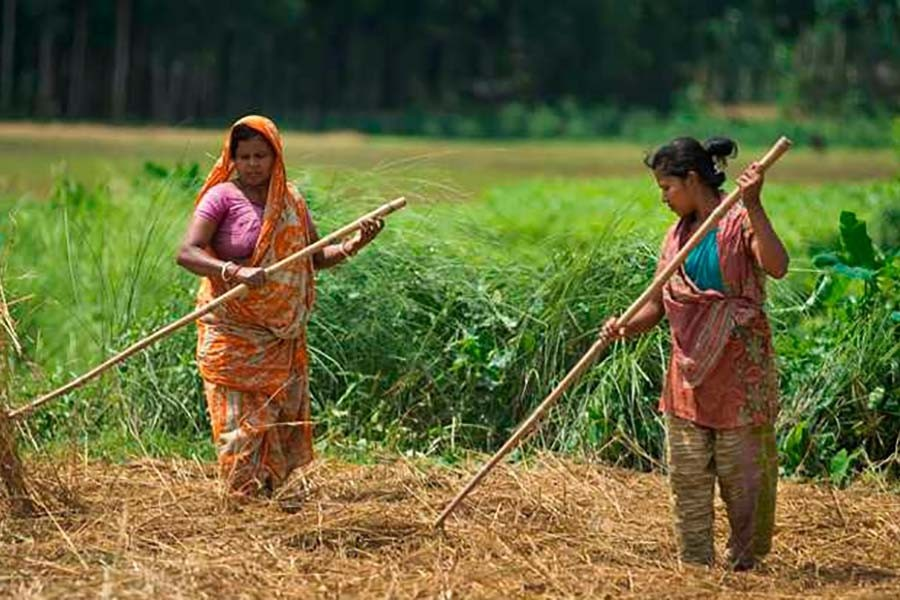 Women's contribution to agriculture
