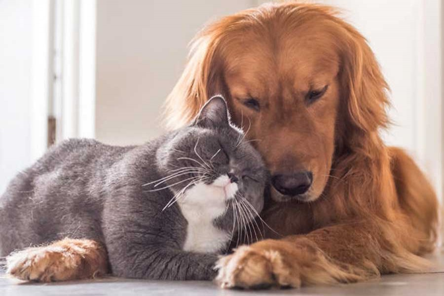 Dog owners are much happier than cat owners: survey