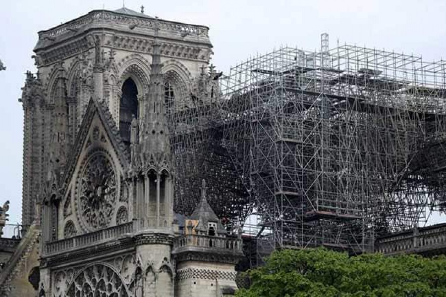 Notre Dame's bees survive cathedral blaze