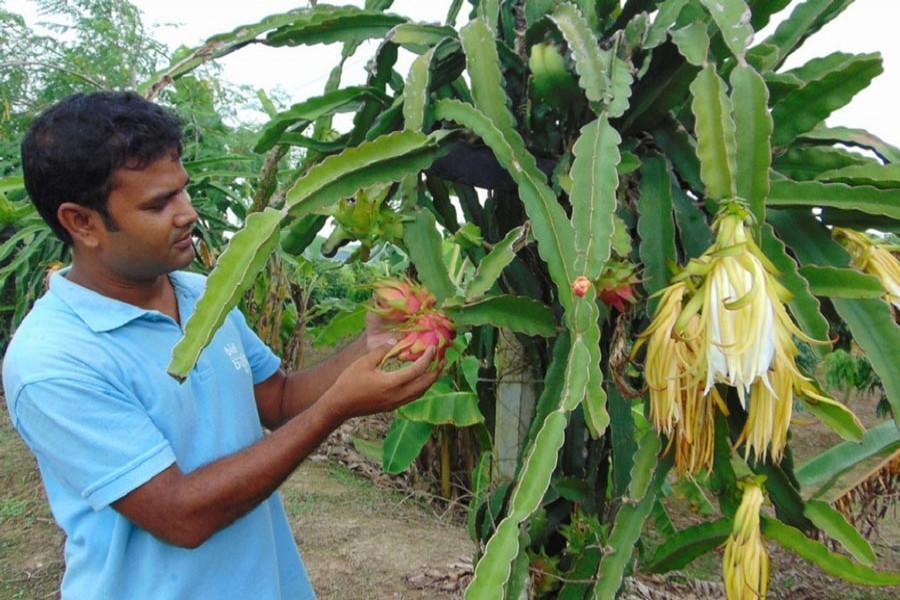 Integrated farming: Its great prospects