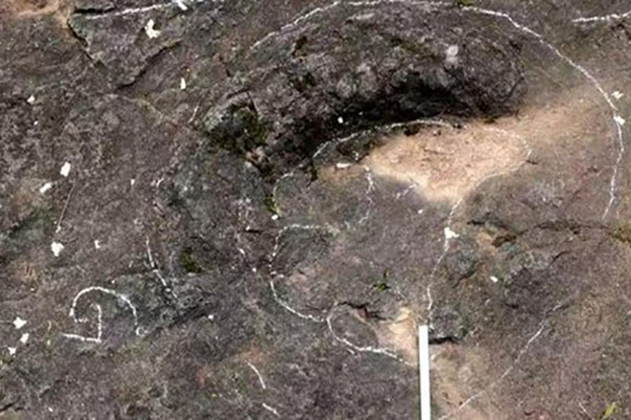Picture shows the footprints of dinosaurs dating back to 100 million years ago. They were discovered in Baxiangang, a village in Lanxi, East China's Zhejiang Province, China. Photo courtesy: Xing Lida