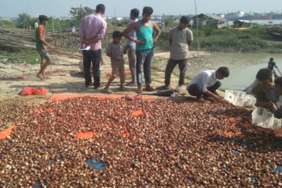 Wholesalers trash 15 tonnes of onion in Chattogram