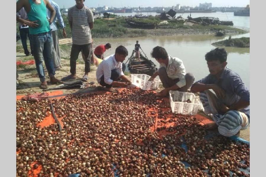 Chattogram traders trash 15 tonnes of rotten onions