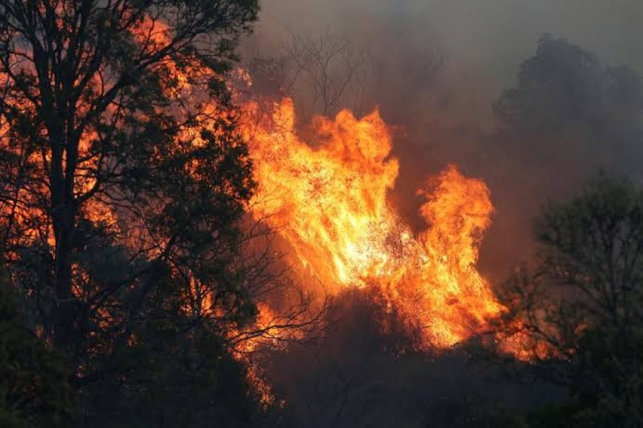 A bushfire rages near the rural town of Canungra in the Scenic Rim region of South East Queensland, Australia, September 6, 2019. Regi Varghese/AAP/via REUTERS