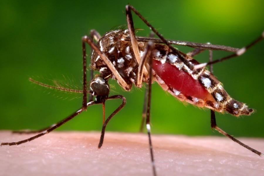 97 dengue patients receiving treatment at hospitals