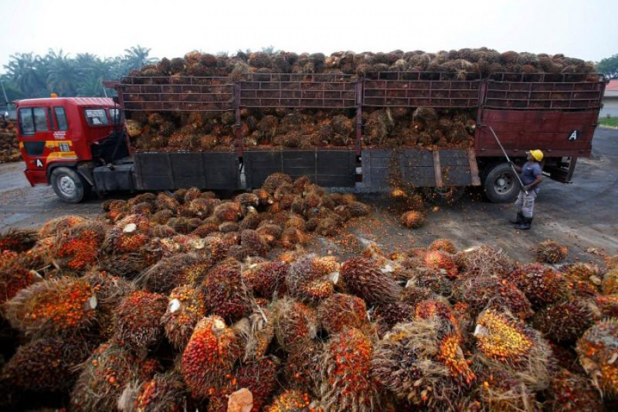 A worker unloads palm oil fruits from a lorry inside a palm oil factory in Salak Tinggi, outside Kuala Lumpur, Malaysia, August 4, 2014. Reuters/File Photo