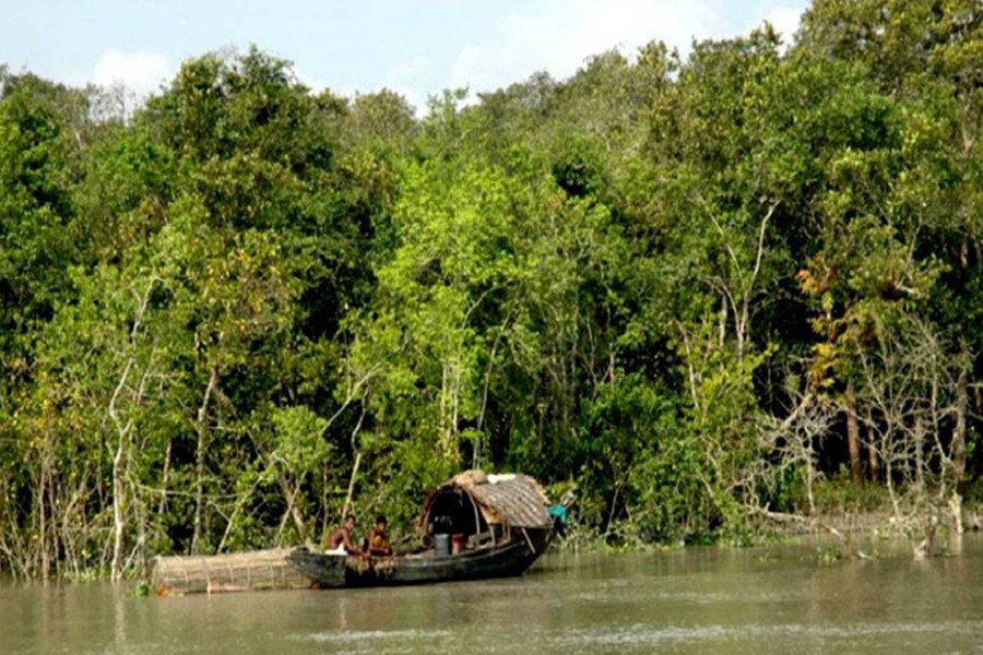 A view of the Sundarbans, the world's largest mangrove forest -- UNB