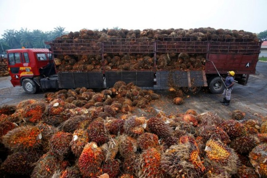 A worker unloads palm oil fruits from a lorry inside a palm oil factory in Salak Tinggi, outside Kuala Lumpur, Malaysia, August 04, 2014. Reuters/Files