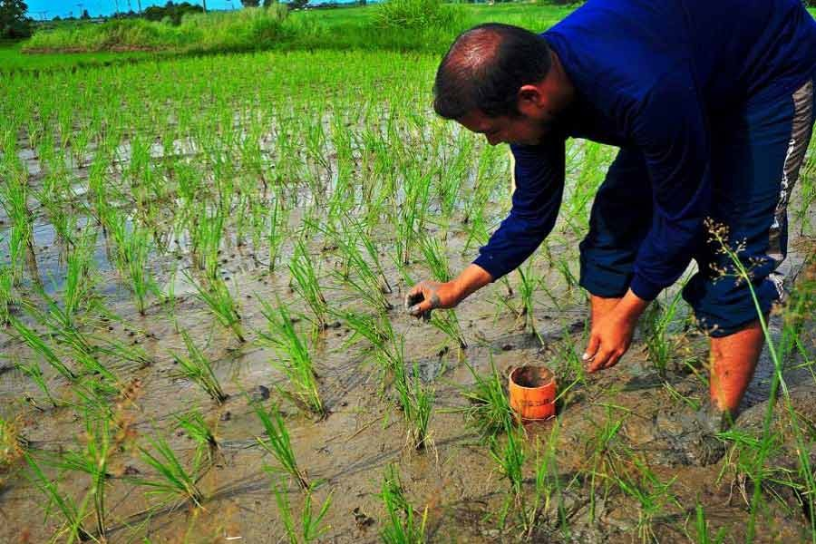Experts welcome agri stimulus, stress on proper distribution
