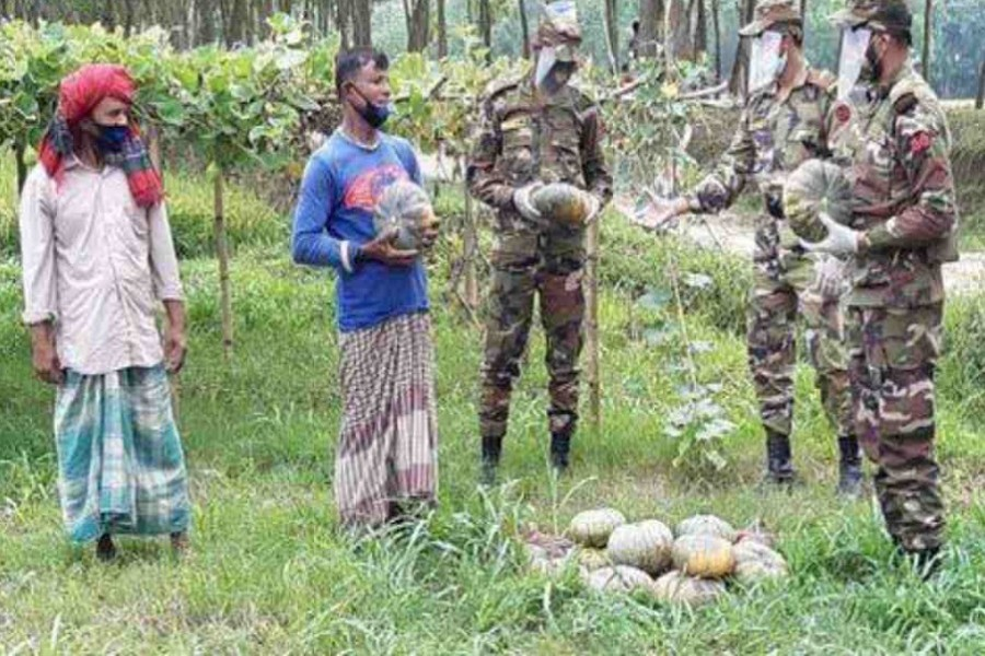 Army's vegetable procurement reduces Kushtia farmers' woes