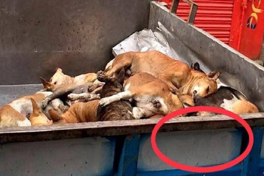 DSCC says photos of stray dog removal are fake