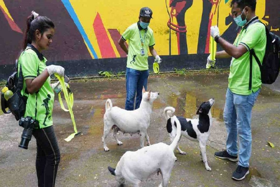 DSCC stops removal of stray dogs for now