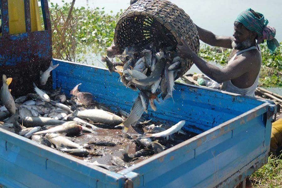 Fish production increases by 50pc in 11 years, PM says