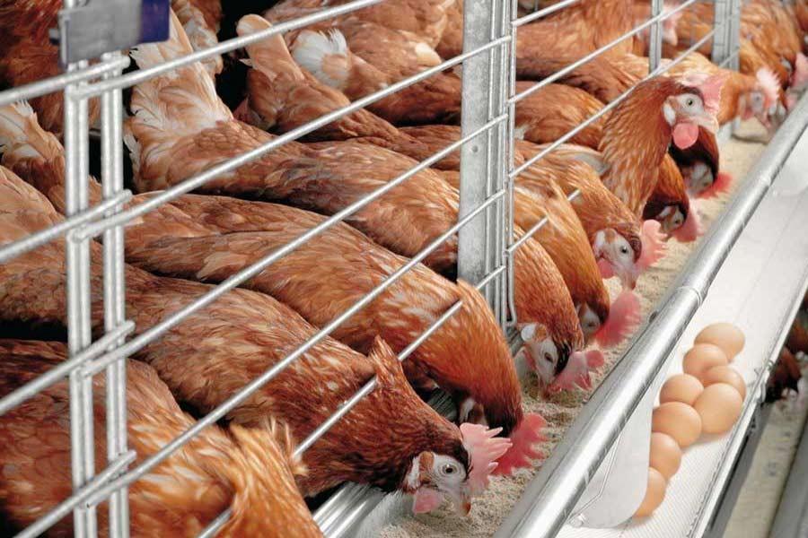 Dispelling bird flu fears