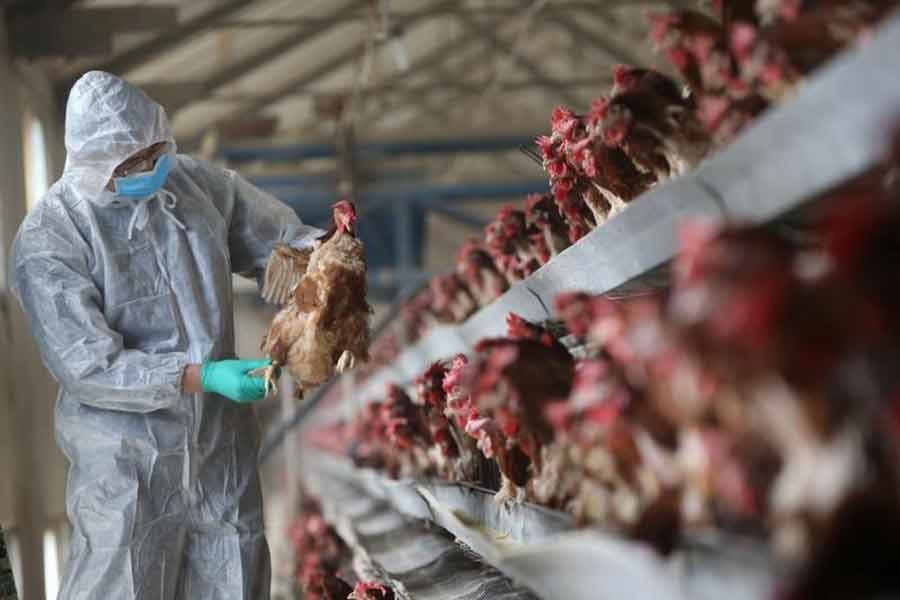 Russia reports first case of human infection with AH5N8 bird flu