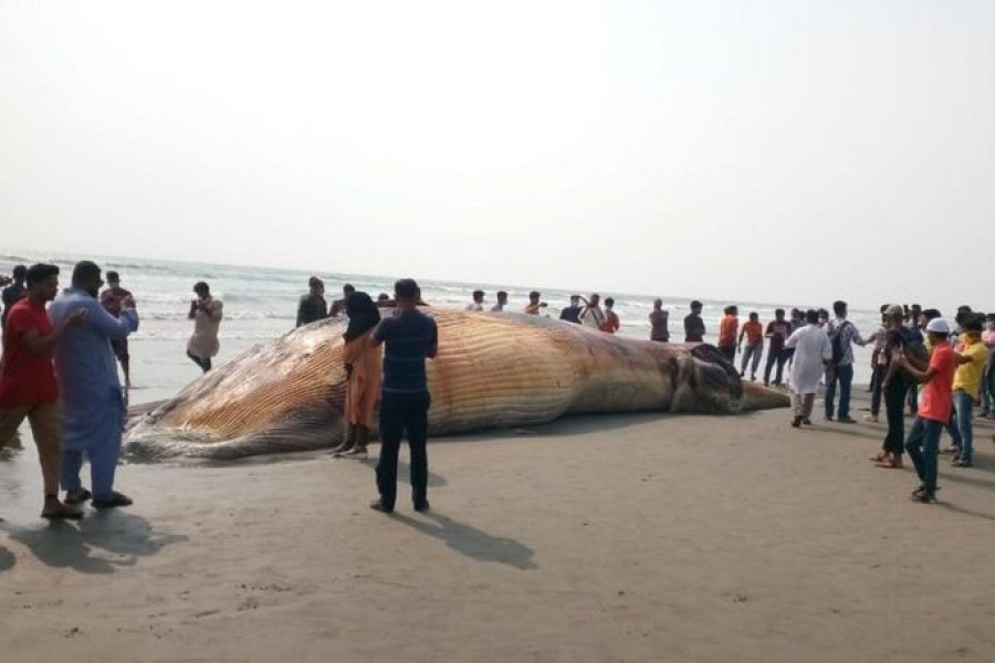 Another dead whale washes up on Cox's Bazar beach