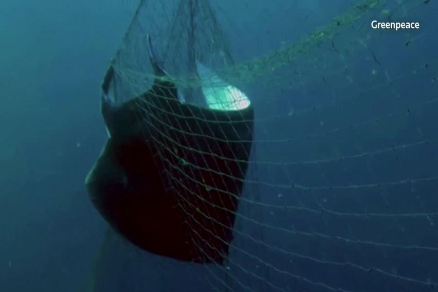Illegal driftnet use widespread in Indian Ocean: Greenpeace