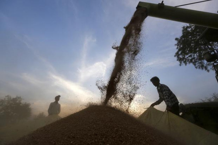 A harvester is used to deposit wheat crop on a tarpaulin in a field on the outskirts of the western Indian city of Ahmedabad on March 24, 2015 — Reuters/Files