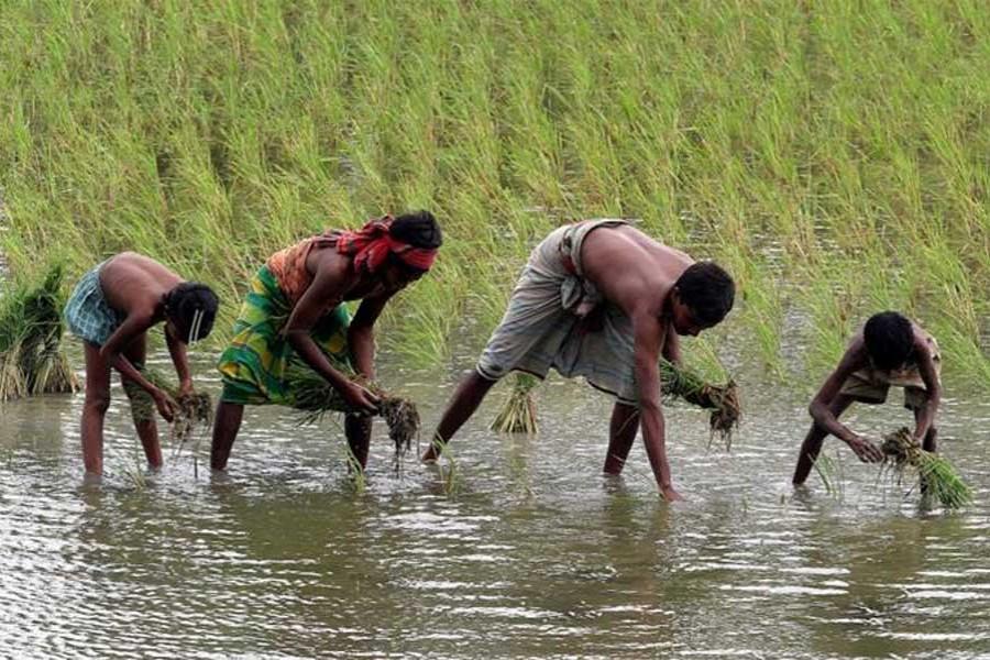 Checking Bangladesh's fast-shrinking farmland