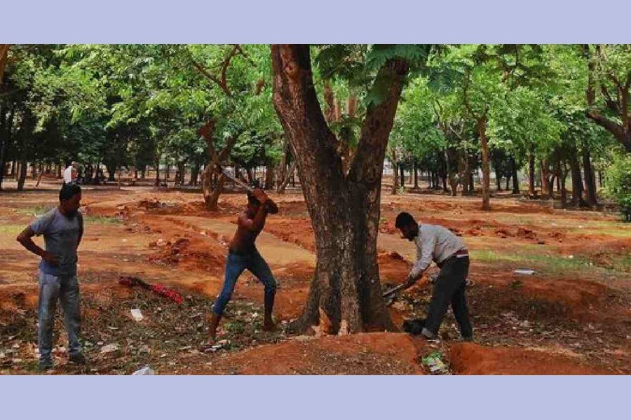 Felling trees for a cause!