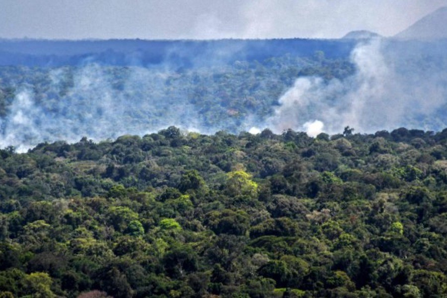 Over 10,000 species face risk of extinction in Amazon
