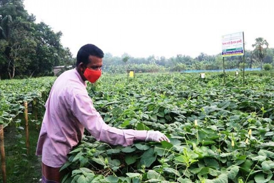 Central bank raises farm credit target to Tk 283.91b