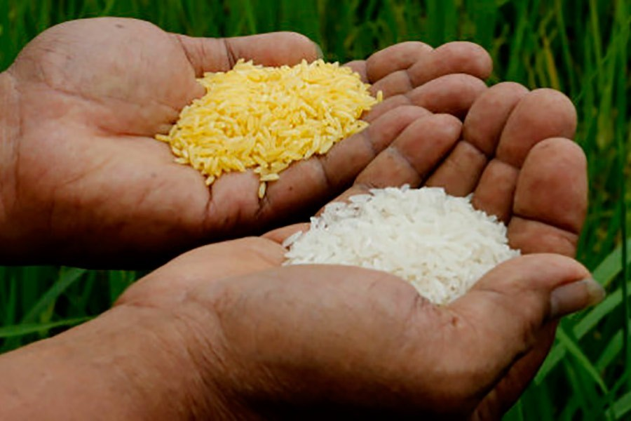 The issue of golden rice