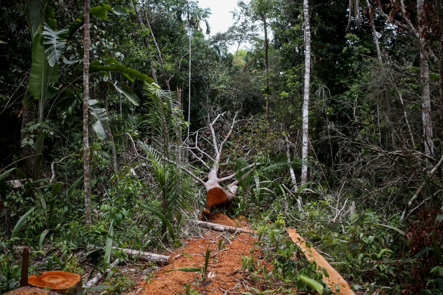 A felled tree is seen in the middle of a deforested area of the Yari plains, in Caqueta, Colombia March 3, 2021. REUTERS/Luisa Gonzalez