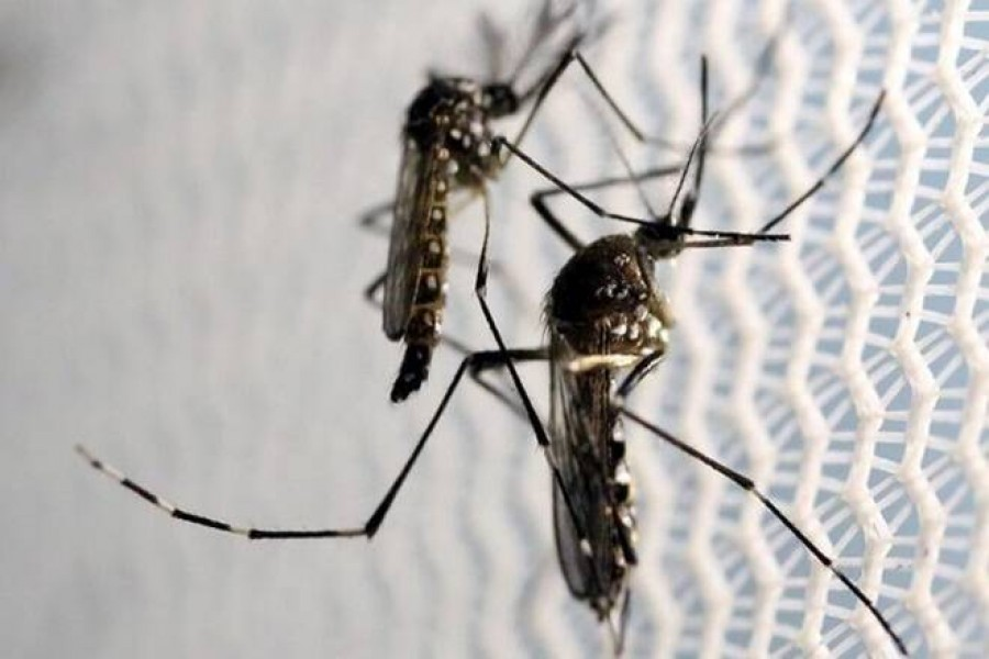 254 more hospitalised with Dengue, no death reported